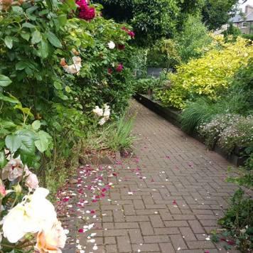 KHW Garden Meditation